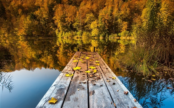 Wallpaper Autumn lake, woods and deciduous