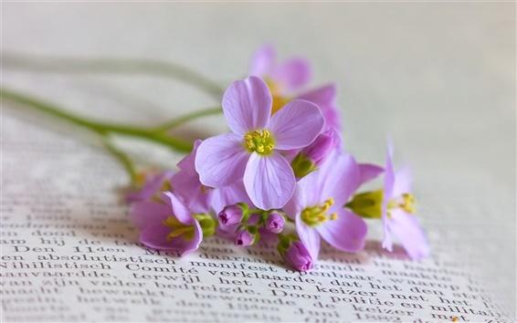 Fondos de pantalla Libros con flores de color púrpura still life close-up