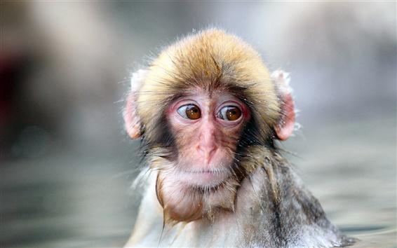 Fondos de pantalla Frío invierno de mono