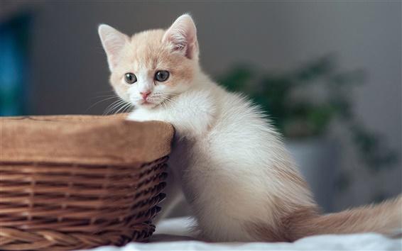 Wallpaper Cute kitten with basket