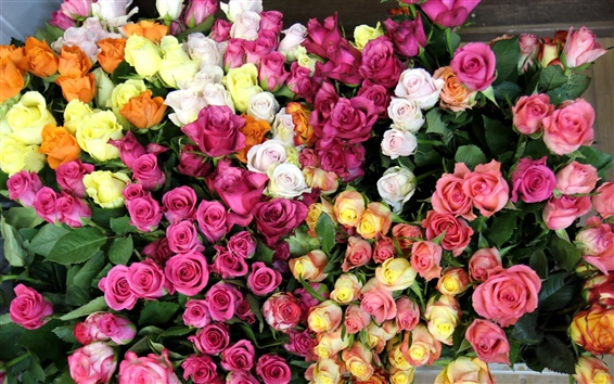 Wallpaper Diverse colors of roses world