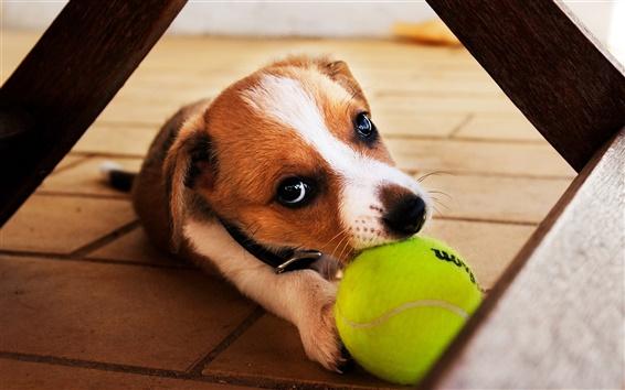 Обои Я вернуть мяч в игру, собака крупным планом