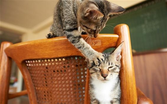Обои Я был издеваются, милый кот непослушным