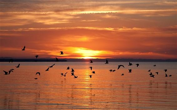 壁紙 ラトビアの風景、飛ぶ鳥、湖、日没