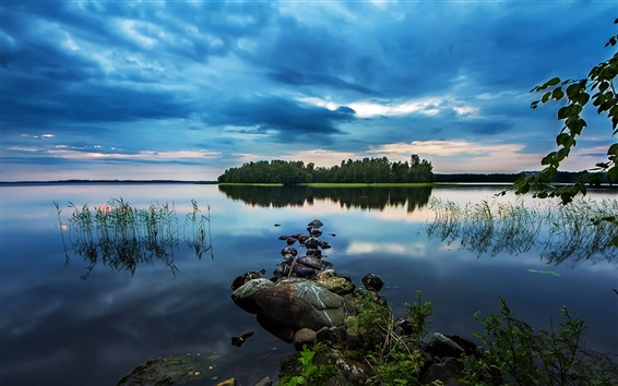 Wallpaper Pond, lake, early morning beauty, stones, woods, water plants, blue style