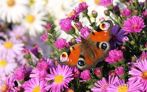 Обои Фиолетовые цветы бабочки