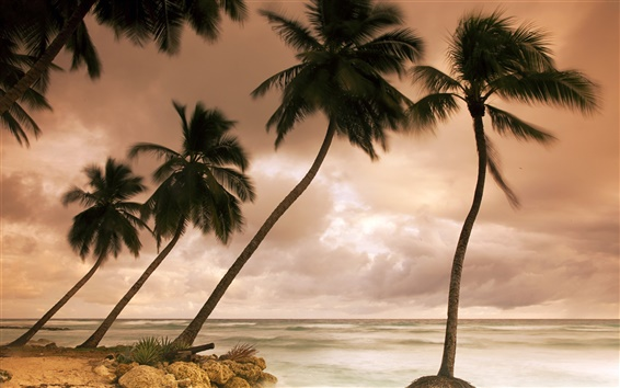 Wallpaper Silhouette of palm trees, cloudy Caribbean coast