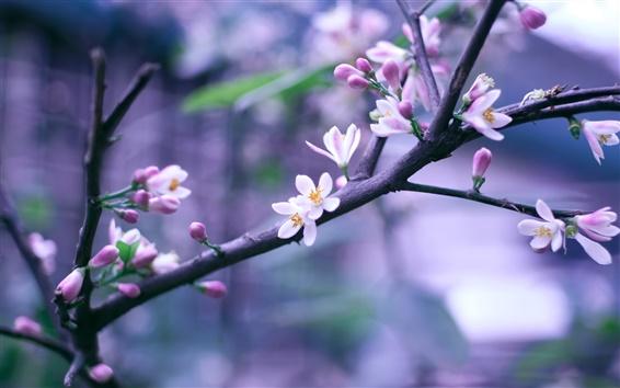 壁紙 満開、ピンぼけで春のピンクの花