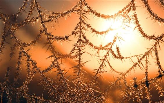 Wallpaper The Cobweb under winter sunset