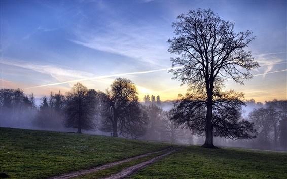 Обои Утром лес, туман, деревья, лучи солнечного света