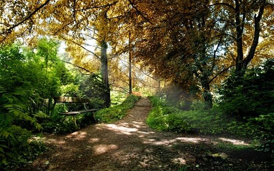 Обои Деревьев вдоль пути в парк, свежий воздух