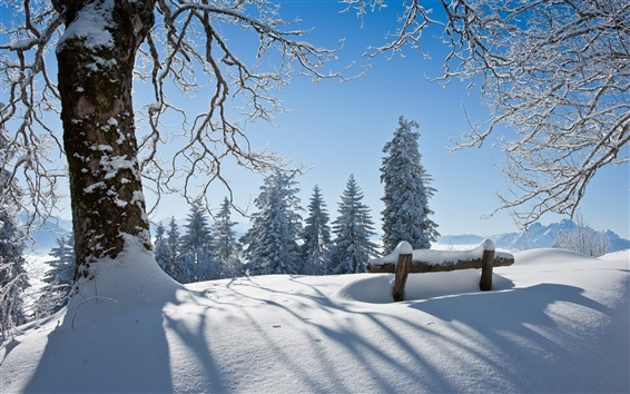 Wallpaper Winter beautiful landscape, thick snow, the trees, the sun