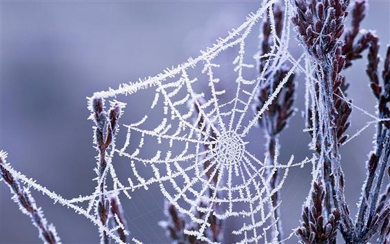 Wallpaper Winter cobwebs