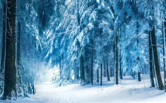 Wallpaper Winter landscape, snow forest