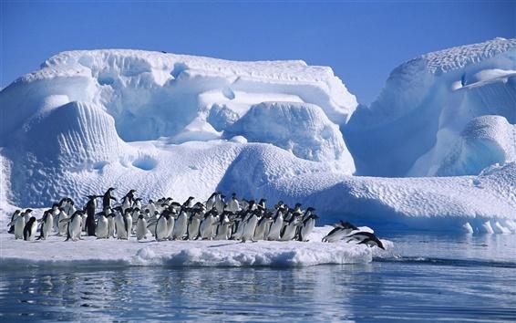 Fondos de pantalla Antártida los pingüinos Adelie, el mar, la nieve y el hielo