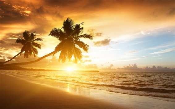 Wallpaper Caribbean coast beautiful scenery, sunrise, palm trees, sea, clouds, sky