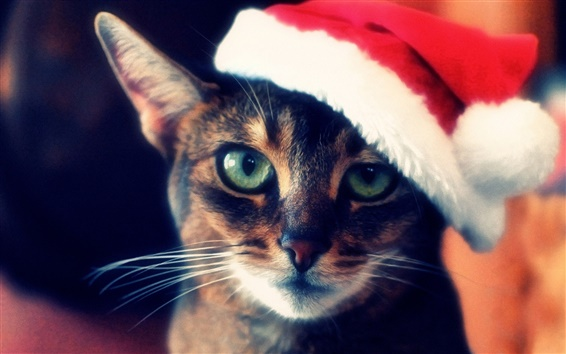 Wallpaper Cat like Christmas