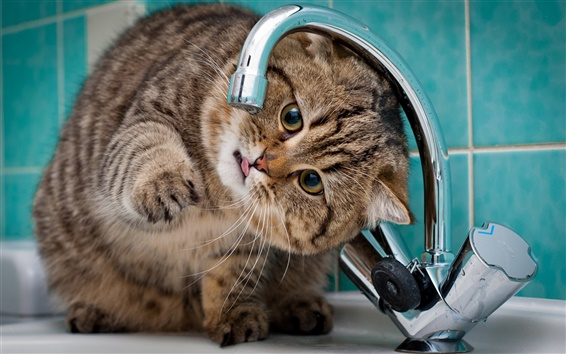 Wallpaper Cat want to drink water