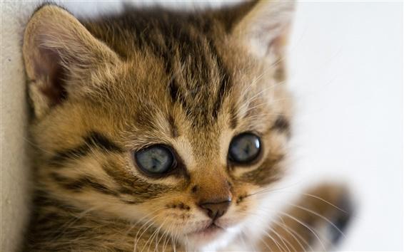 Wallpaper Cute kitten close-up photography, eyes beard close-up
