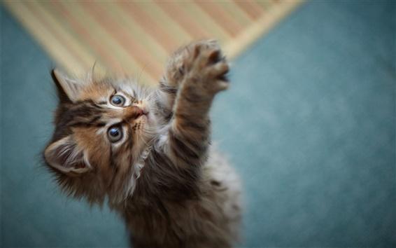 Wallpaper Cute little furry cat