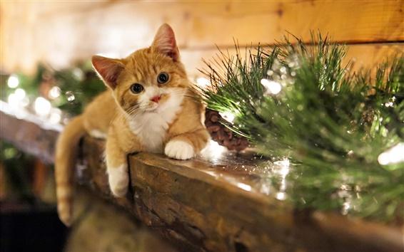 Papéis de Parede Férias em casa gatinho bonito