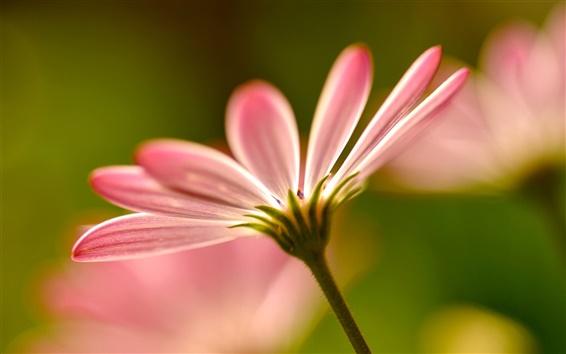 Wallpaper Pink flower petals macro photography