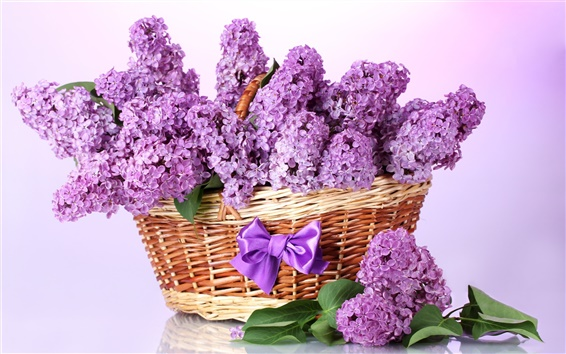 Wallpaper A basket of lilac flowers, bow, purple