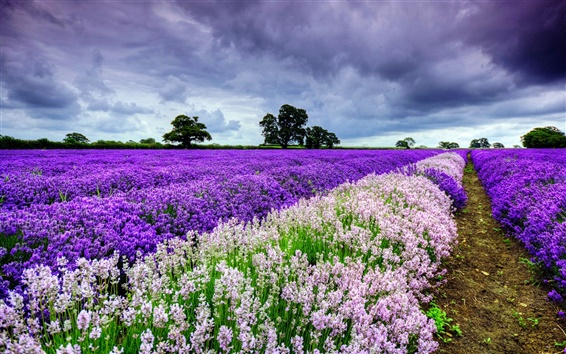Wallpaper Beautiful the world of lavender, sky, clouds