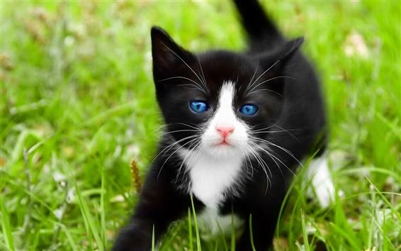 Wallpaper Black cat, blue eyes