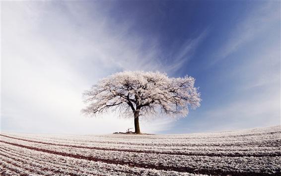 Обои Широкое поле, одинокое дерево, голубое небо, белые облака, мороз