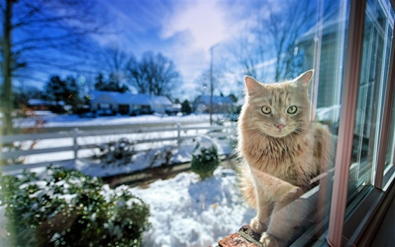 Wallpaper Cat in the window, snow winter