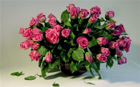 Обои Многие розовых роз, букет ваза