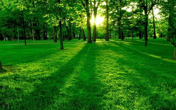 Fondos de pantalla Estacione el sol de la mañana, los árboles y la hierba verde