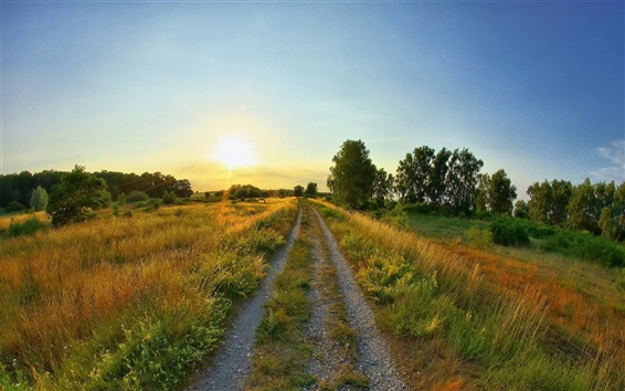Wallpaper Road weeds, summer Sunrise