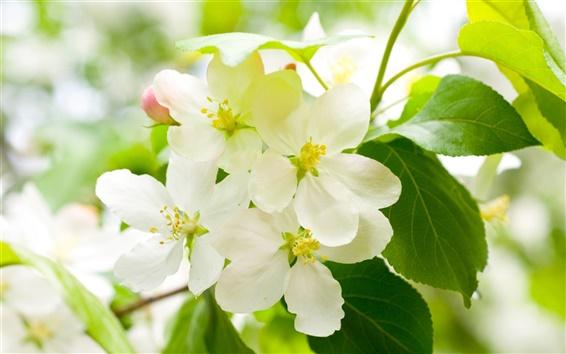 Обои Весна пришла, и белые вишни в цвету