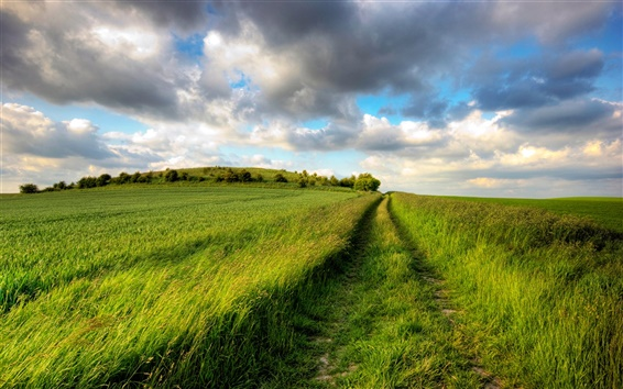 Fond d'écran Champs d'été, vert, route, ciel nuageux, sans fin