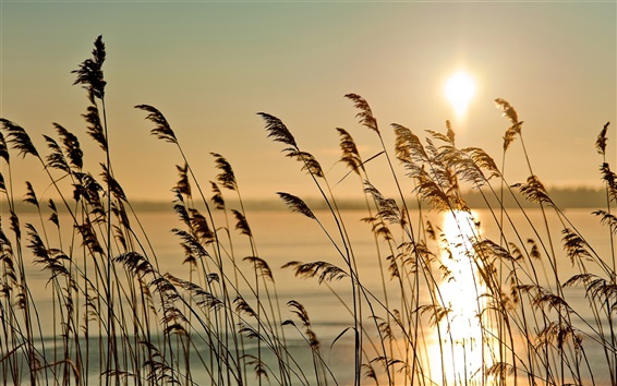 Wallpaper The early morning riparian sunrise scenery, reed, fog, river