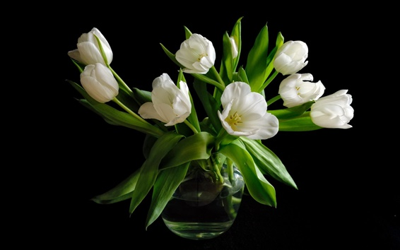 Wallpaper Vase, white tulip flowers, black background