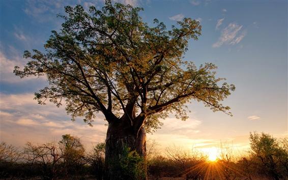 Wallpaper Africa, Zimbabwe, savanna nature landscape, baobab, shrubs, sunset, rays