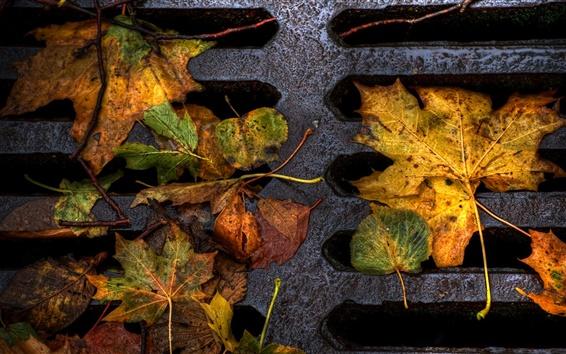 壁紙 秋クローズアップ地面に葉
