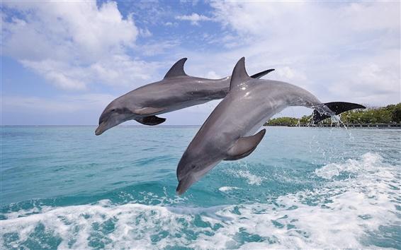 Fond d'écran Dauphins, beau saut, île de la baie du Honduras
