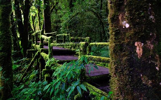 Обои Чиангмай, Таиланд, Дойинтанон национальный парк