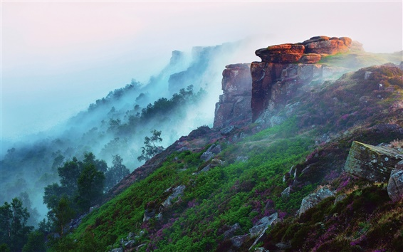 Wallpaper Early morning mountain landscape, forest, fog, flowers, grass, stones