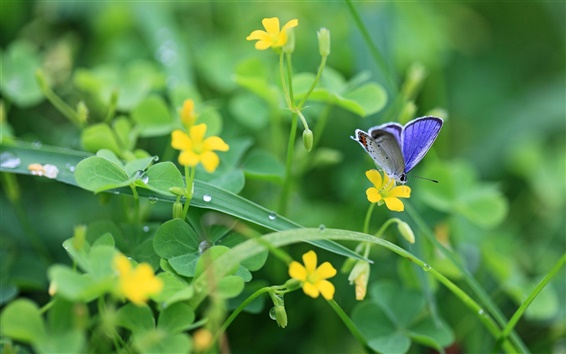 Wallpaper The breath of spring, yellow wildflowers and blue butterfly