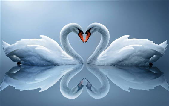 Wallpaper White Swan couple, love heart-shaped, reflection