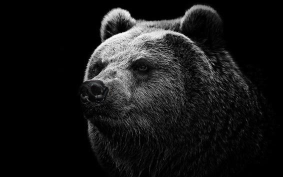 Обои Черный фон черный медведь