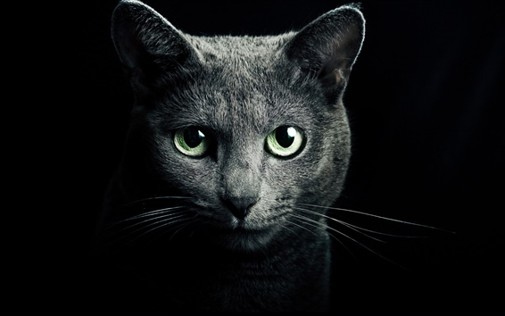Wallpaper Black cat, green eyes, black background