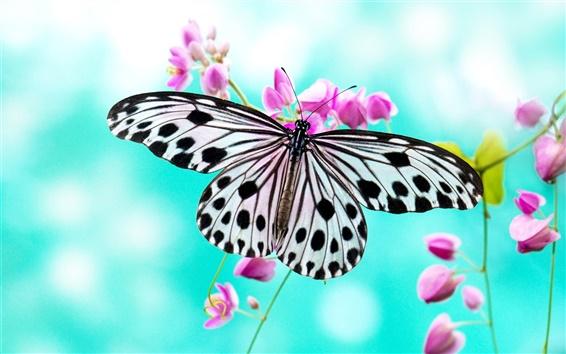 Wallpaper Butterfly love purple flowers