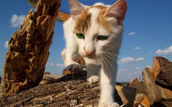 Papéis de Parede Cat chegando, abrir caminho