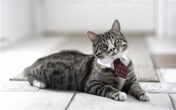 Papéis de Parede Gato usando uma gravata